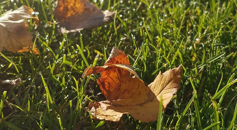 Rasen im Herbst