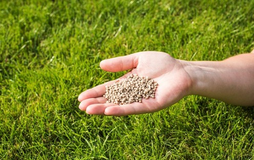 Rasen düngen von Hand